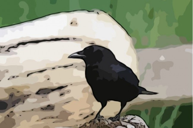 crow-cartoonized