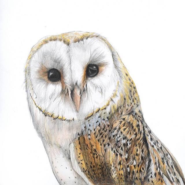 lotq-rebecca-clark-owl
