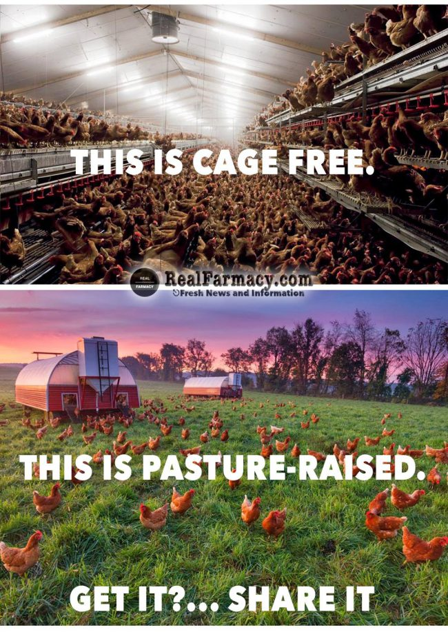 LOTQ via richard saunders cage free