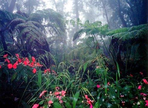 eocene_rainforest-500