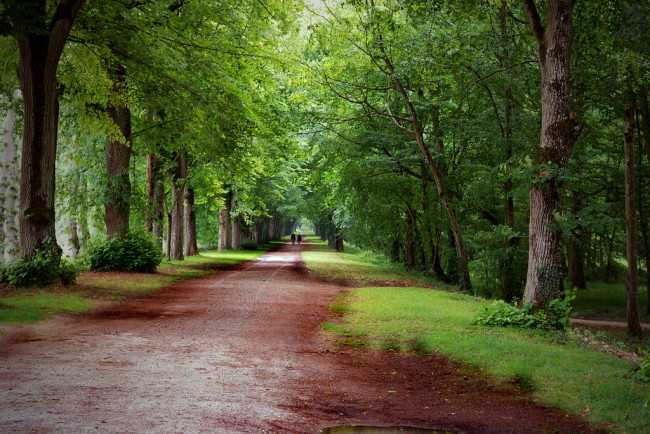 forest-france-Luca-Montanari