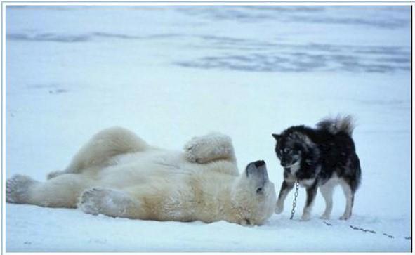 norbert rosing bear dog